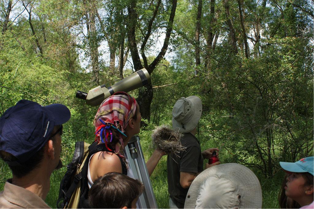 Observación de aves en el arroyo El Moralejo – 10 de mayo de 2014.