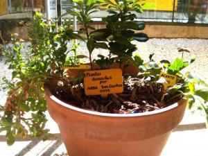 Maceteros de plantas donadas por ARBA en el Centro de Salud de la 2ª fase