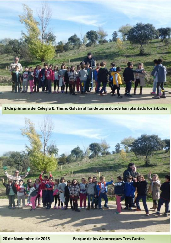 Plantación con alumnos del Colegio Tierno Galván – 20 de Noviembre 2015