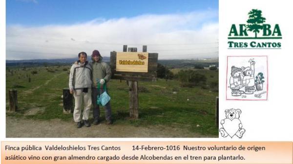 Plantación en Valdeloshilos – 14 Febrero 2016