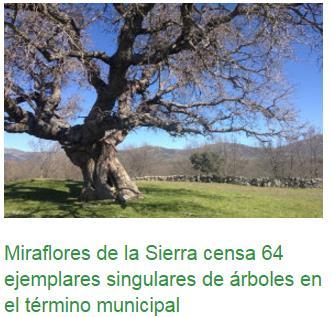 Catálogo de árboles singulares en Miraflores de la Sierra – 23 septiembre 2016