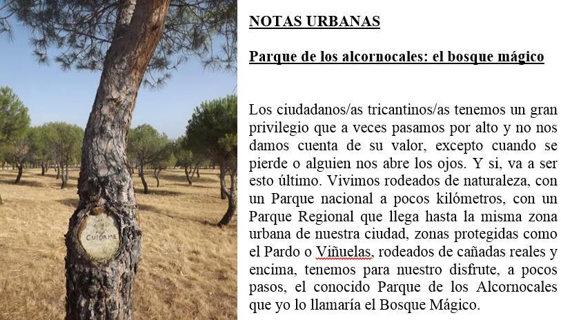 El bosque mágico de ARBA Tres Cantos – Artículo de Pedro Pozas Terrados